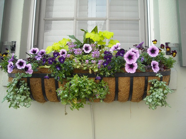 4 Ways To Add Curb Appeal To Your Home - Window Box Flowers