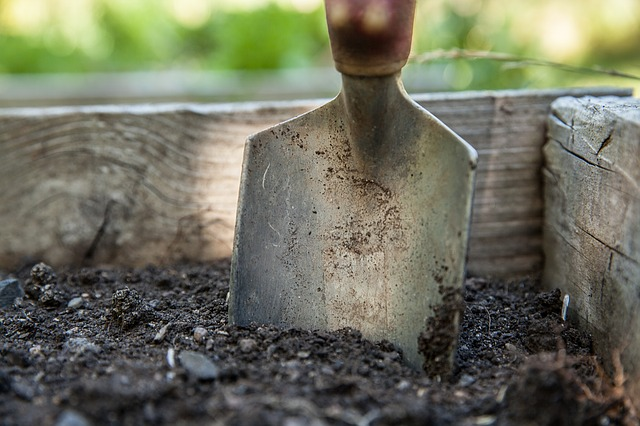 Ground Cover Plants – A Must For Every Garden! - Garden Spade