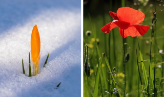 How Does Your Garden Transform From Winter To Summer