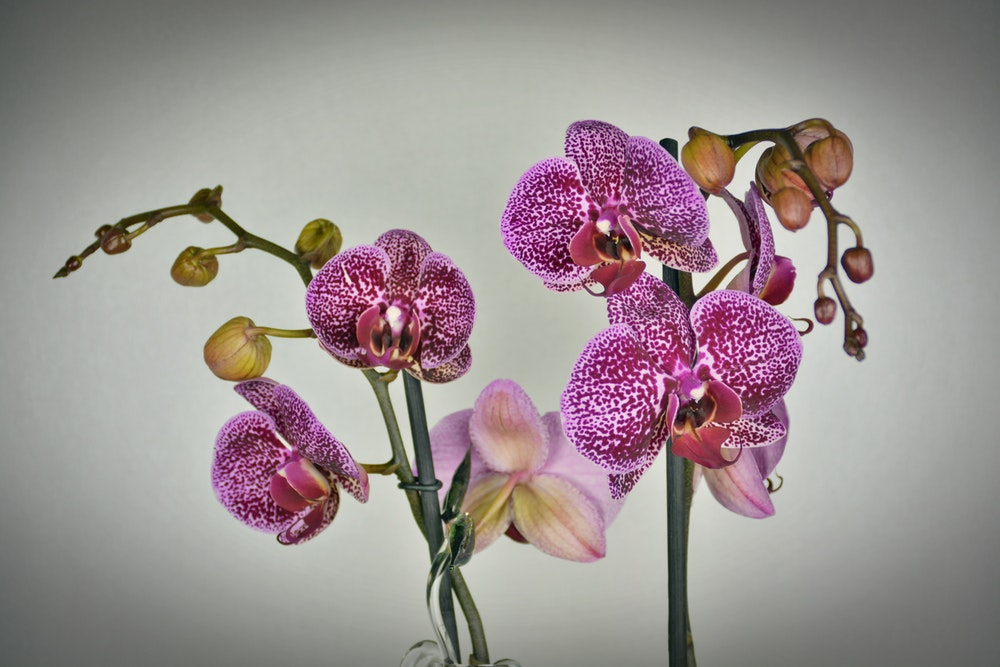 Turn Your Home Into An Urban Jungle - Orchid