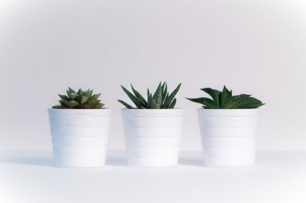 Turn Your Home Into An Urban Jungle - Succulent Plants