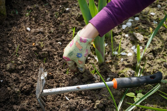 Why You Should Grow Your Own - Gardening