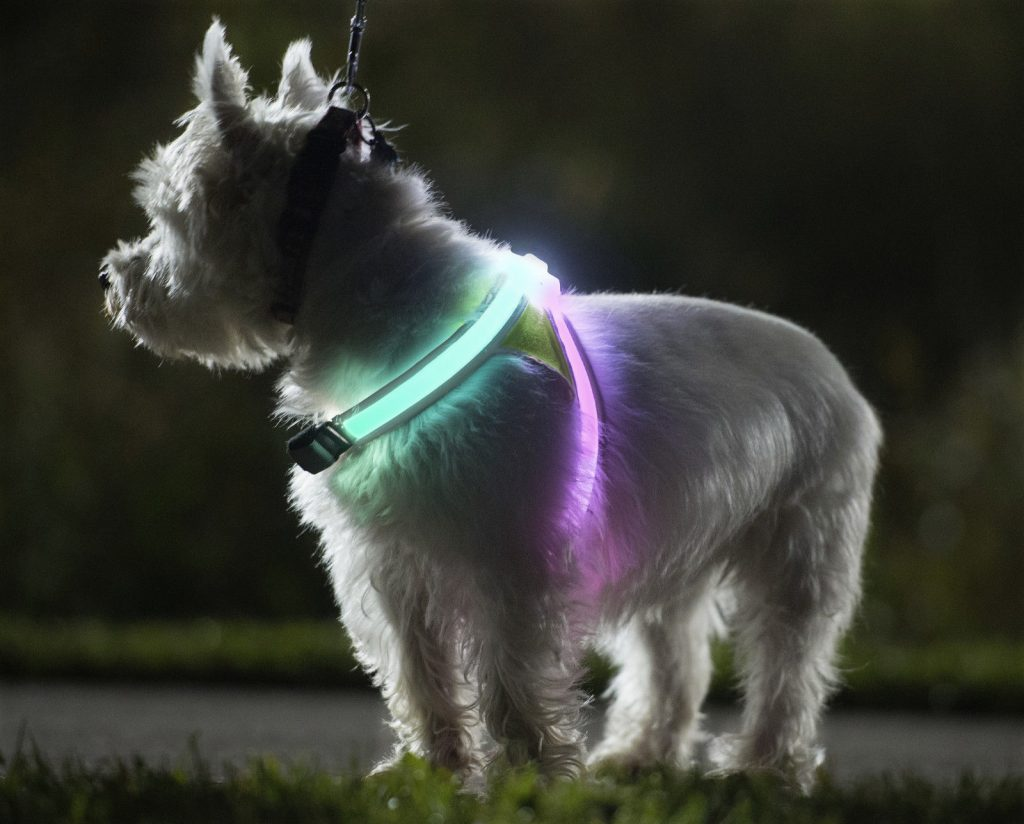 4 Ways To Pander To Your Pooches Needs - NOXGEAR LightHound - Image Via eBay - Sold By TrailAdventureStore
