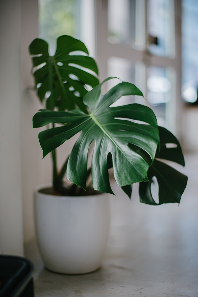 Interior Design Trends in 2019: 5 Awesome Ideas To Try - Rubber Plant