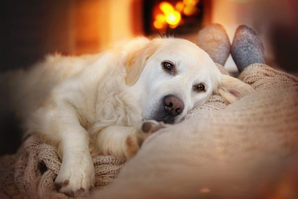 Dog warm by the fire with owner